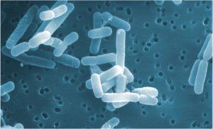 ロイテリ菌バイオガイア